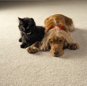 cat-and-dog-carpet-300x296